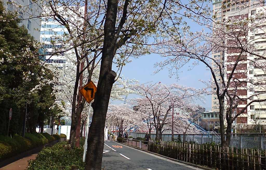 ニューオオタニ イン東京 付近の桜
