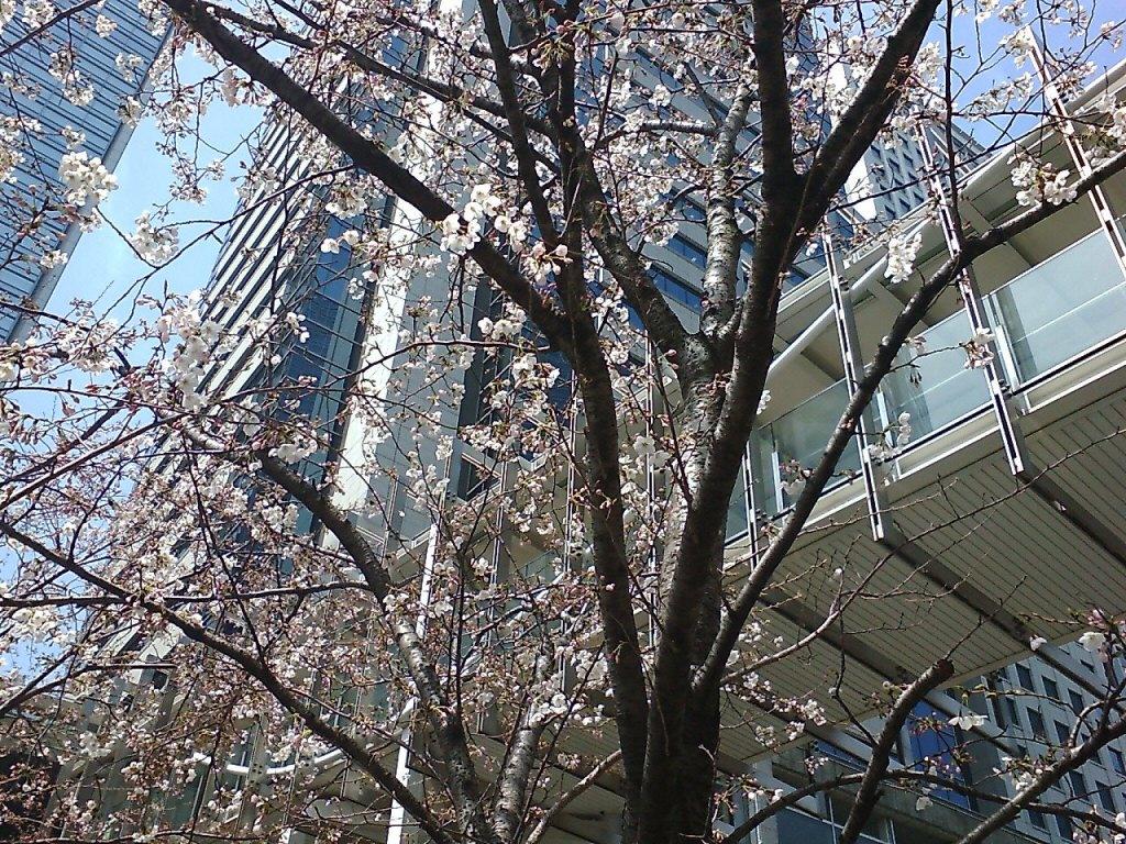 桜2009春
