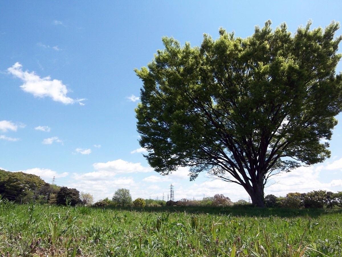 荒屋敷貝塚の木